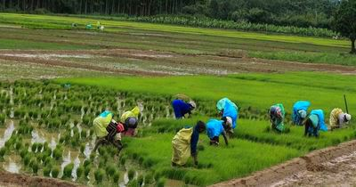 Agriculture in Wayanad, Plantaions in Wayand