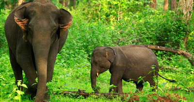 Wayanad  wildlife