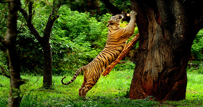 Wild Life in Wayanad , Wayanad, Kerala, India