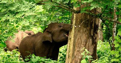 muthanga wildlife sanctuary wayanad