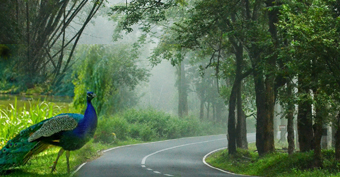 Image result for Wayanad