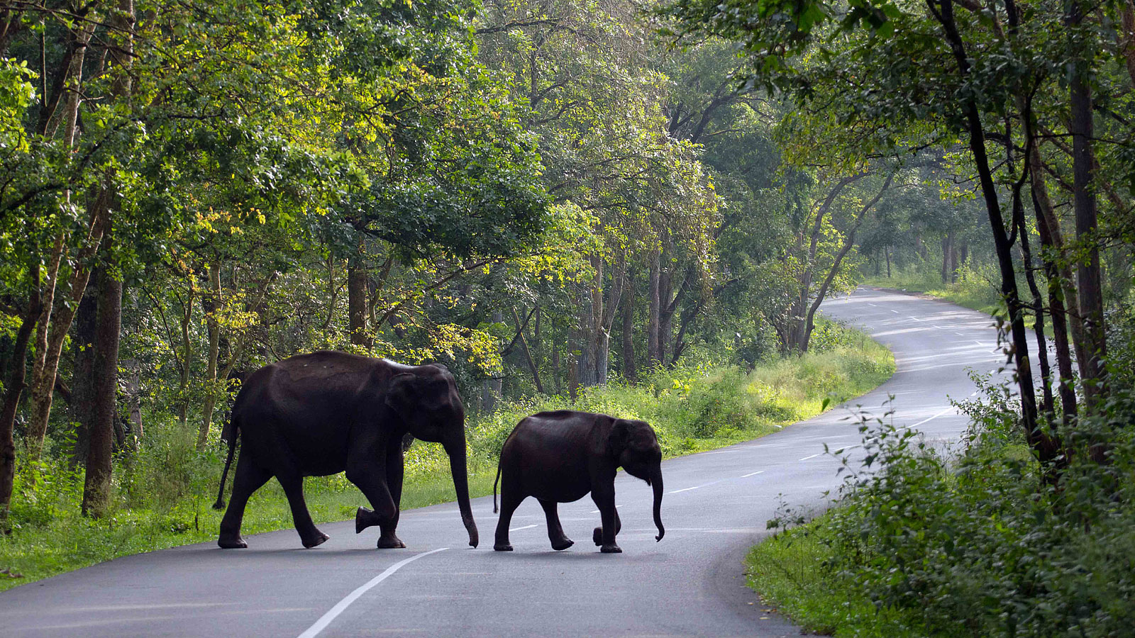 Enjoy Tour packages in Wayanad